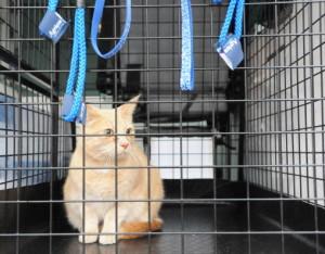 djurambulansen-stockholm-katt-bur